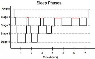 Sleep Cycles – From Wikipedia
